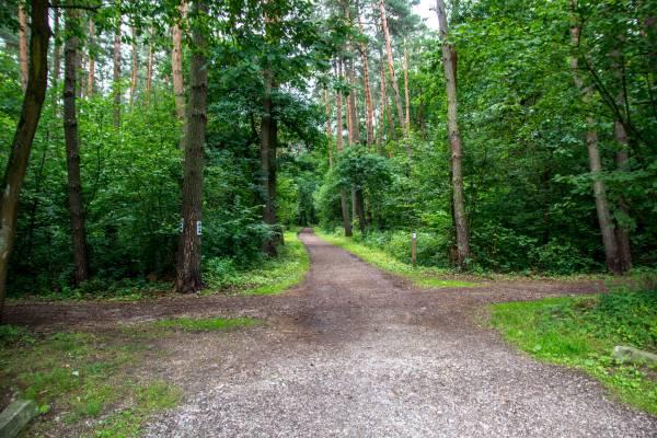 """Ścieżka przyrodniczo-leśna """"Puszcza Niepołomicka"""""""