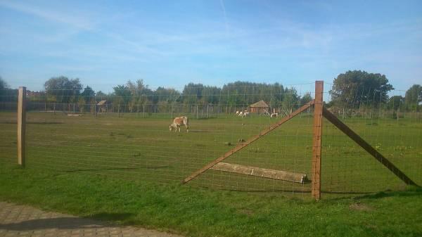 ZOO Safari Borysew w Poddębicach