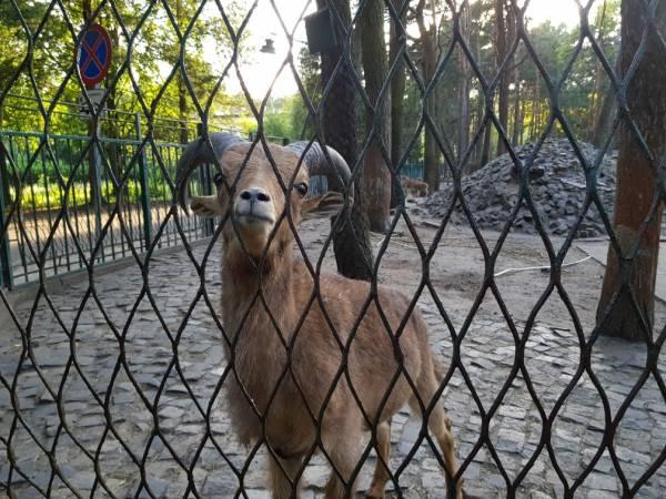 Mini Zoo im. Jacka Kuronia w Sosnowcu